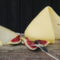 kaufen tetilla Käse online